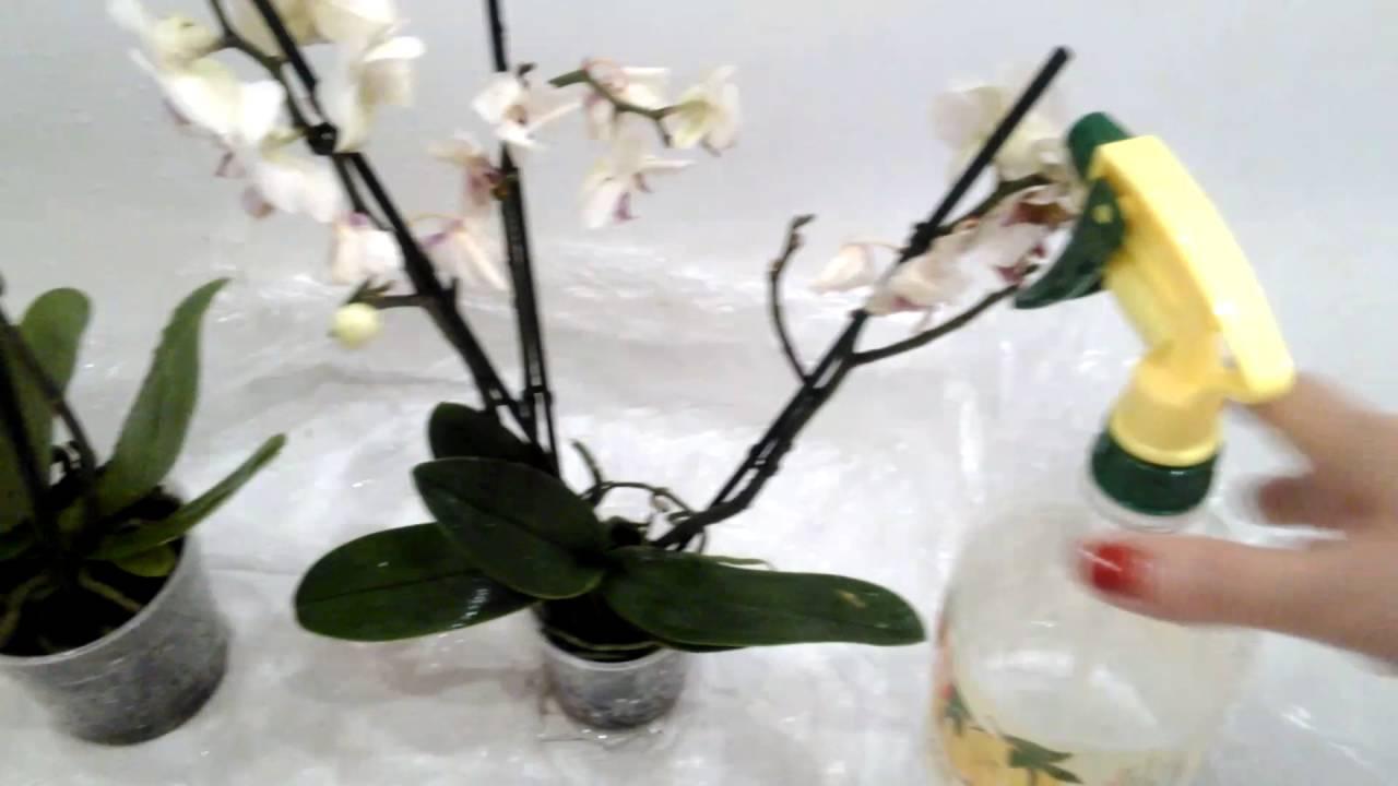 Как пересадить орхидею после покупки в магазине
