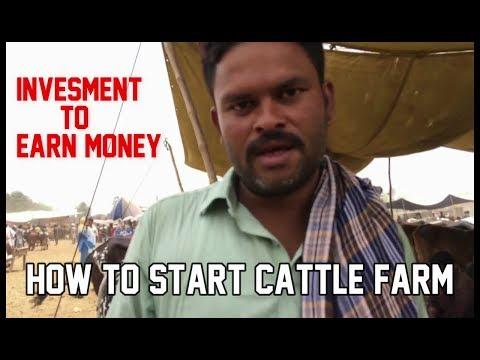 How to Start Bulls & Cow Farm.?? | Tips | Rate.? Bahawalpur Cow Mandi 2018..