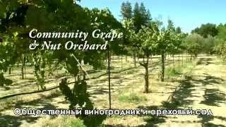 Как создать город сад.(С помощью этого видео-фильма вы узнаете от Джеффа Лотона, каким может быть любое Родовое Поселение или приг..., 2015-07-22T11:57:50.000Z)
