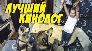 Дрессировка хаски / Лучший кинолог / команды для собак и как научить собаку
