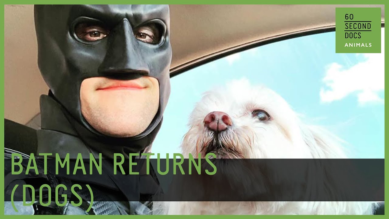 Guy Dresses As Batman to Save Cats And Dogs From Shelters