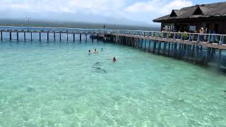 Swimming with the Dolphin at MOAP, Misamis Occidental