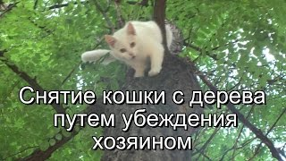 White cat salvation. Спасение кошки.