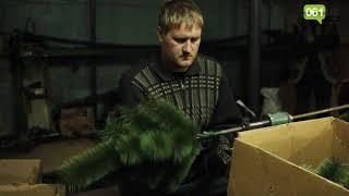 Как в Запорожье делают искусственные елки