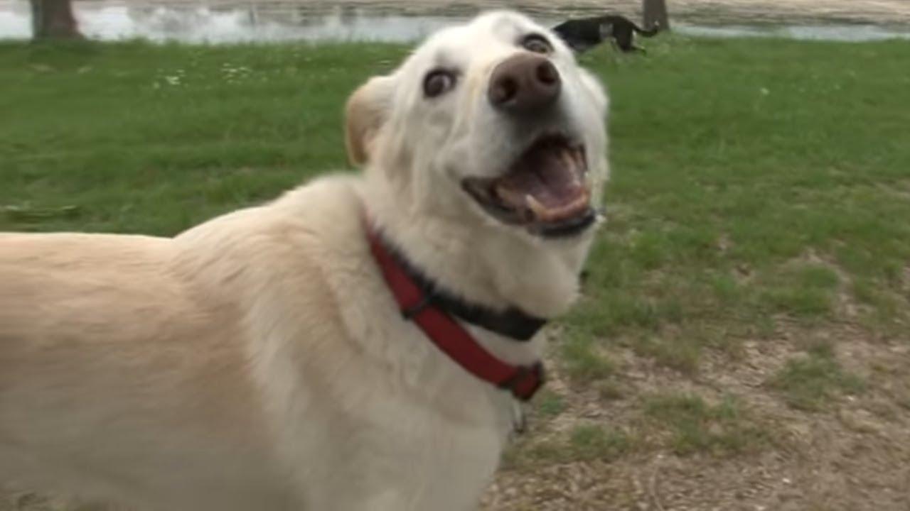 Le collier antivol de chien