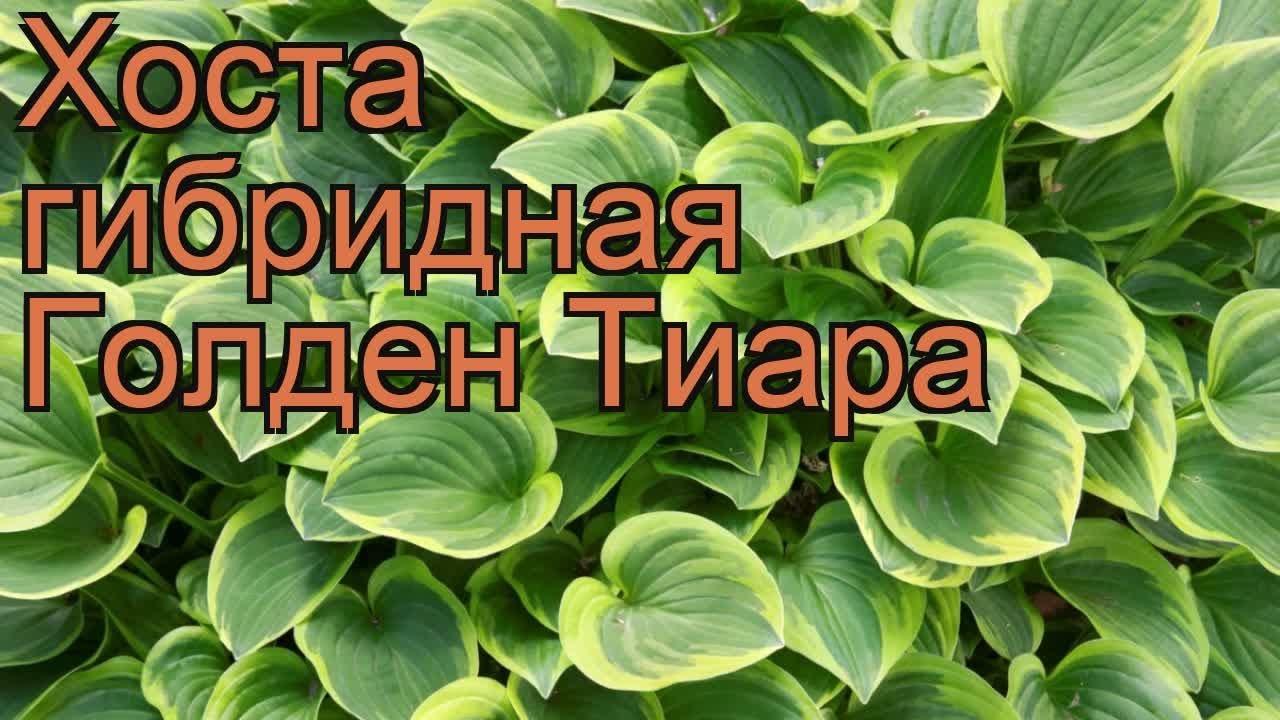 Хоста посадка и уход / Ботанический сад, Харьков - YouTube