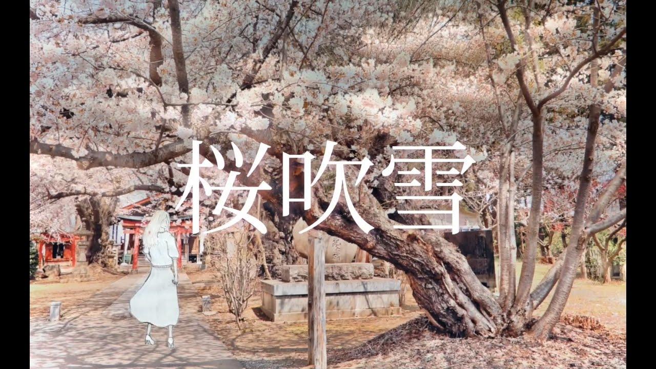 Download 桜吹雪 - Shunki MV