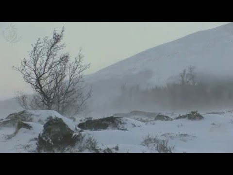 🎧 Winter Storm Sound (Snowstorm) With Snowdrift And Blizzard Ambience For Sleeping  And Relaxation