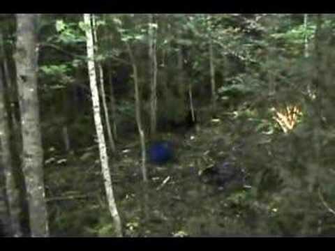 Maine Black Bear Hunt