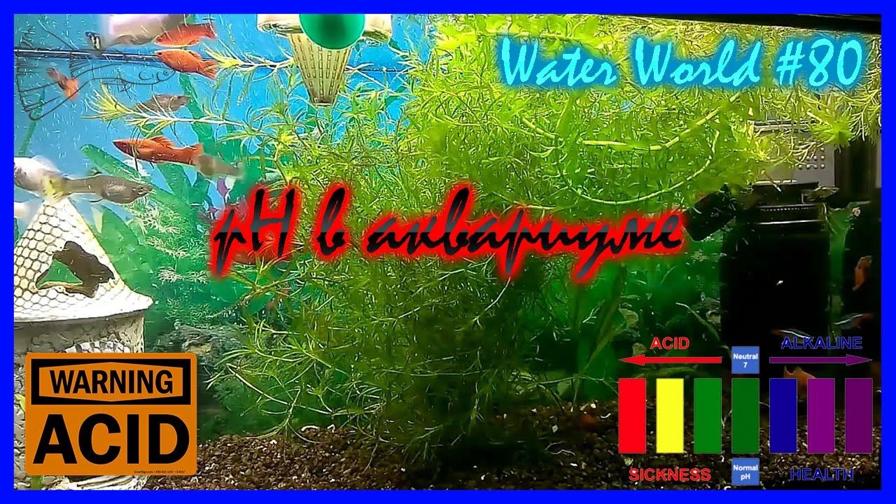 Water World #80 / pH в аквариуме / Нормы / Определение / Регулировка