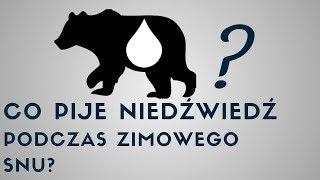 Co pije niedźwiedź podczas zimowego snu? 💧🐻