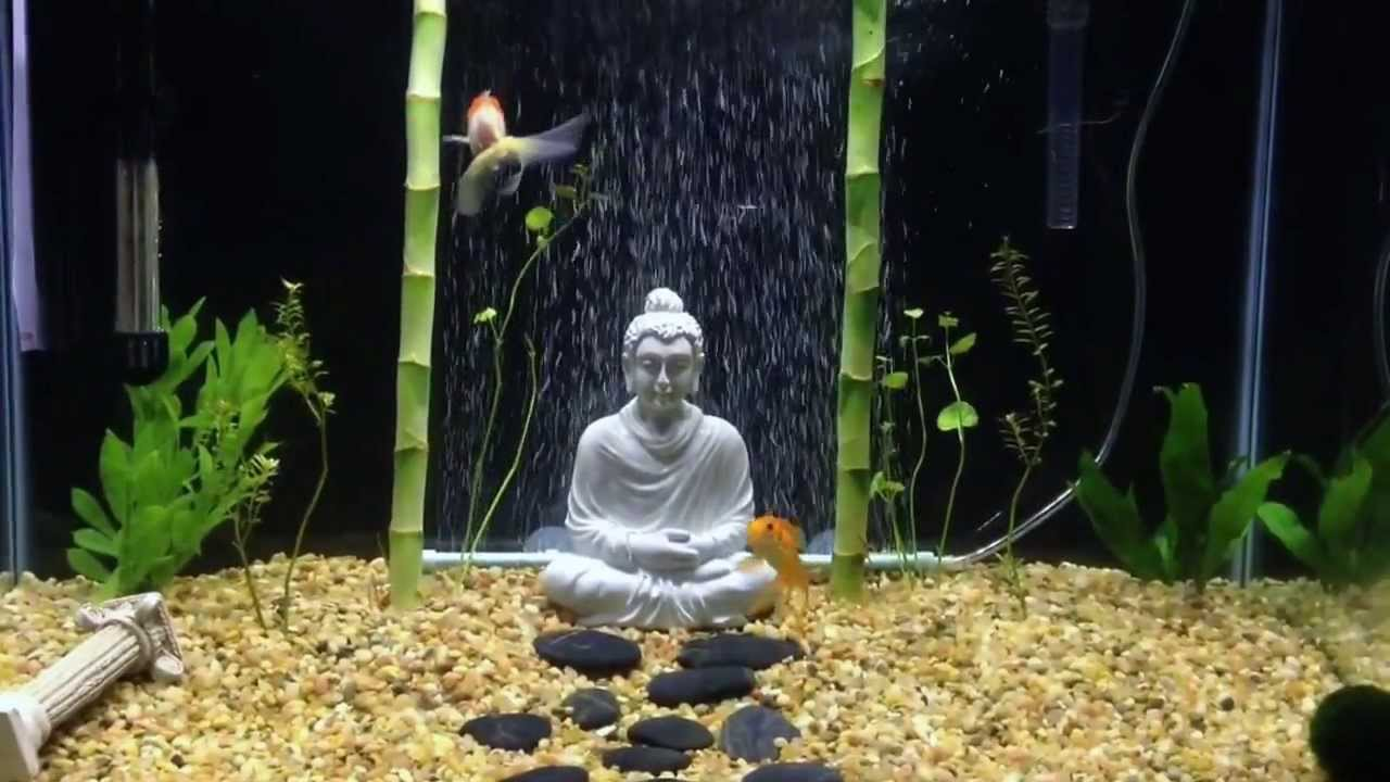 Image result for buddha fish tank