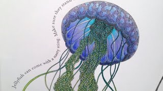 Watch me colour: Jelly Fish | Animal Kingdom Color me, Draw me