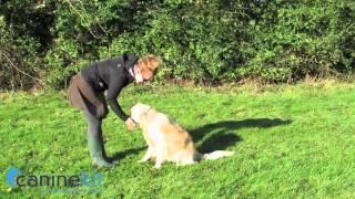 Green & Wilds Dog Training Treats Video