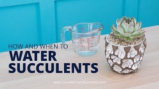 How and When to Water Succulents in Pots With and Without a Drainage Hole