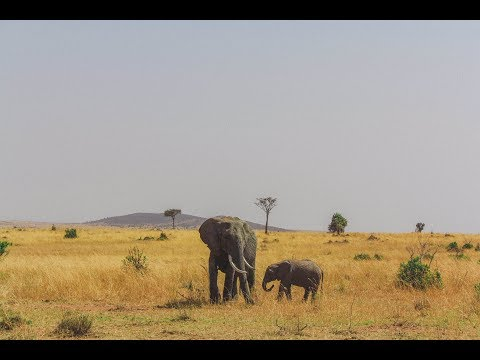 African Safari Adventure GO PRO travel video