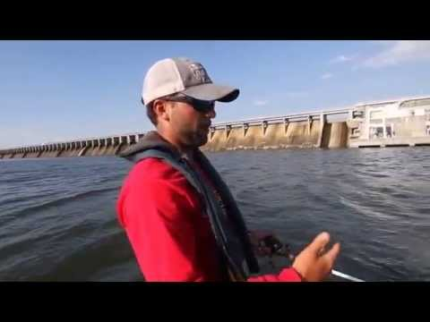 Shoals bass fishing guide cameron gautney fishing below for Wheeler lake fishing report