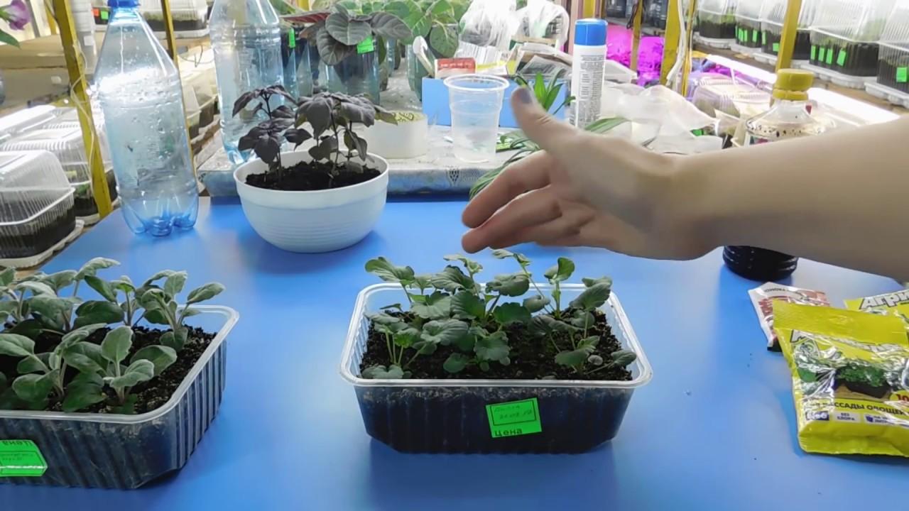 Виола фото каталог семян с доставкой от лучших интернет-магазинов. В нашем каталоге вы можете выбрать и купить семена виолы от 4.