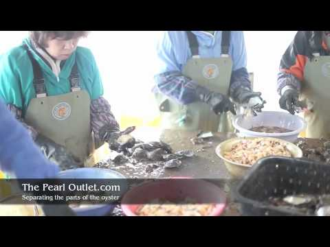 Japanese Akoya Pearl Farming