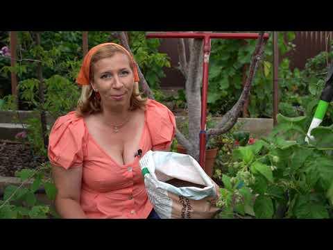 Вопрос: Чем подкормить белку зимой в своем саду?