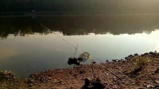 ловля сома на донку с берега на мясо(в этом видео вы можете увидеть захватывающую охоту на речного гиганта- царя СОМА., 2016-08-24T19:46:18.000Z)