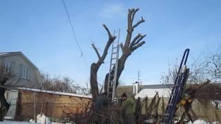 Пилим дерево с папой)))(г.Армавир, январь 2017 Пилим с папой абрикосу!!! Этот ролик обработан в Видеоредакторе YouTube (http://www.youtube.com/editor), 2017-01-15T16:40:22.000Z)