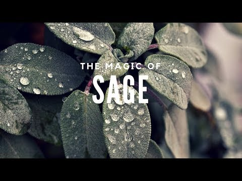 The Wisdom Herb: The Magic Of Sage -- Magical Herbs