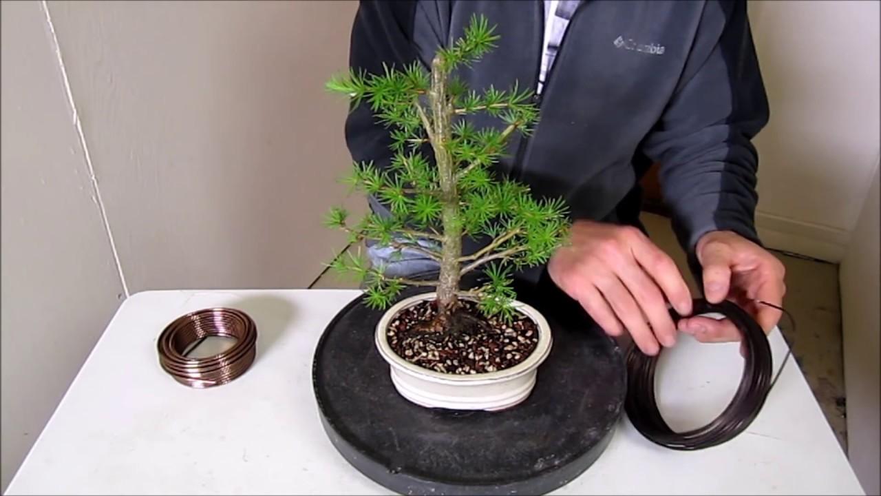 cara wiring bonsai step