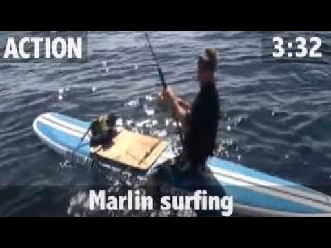 MARLIN FROM A SURFBOARD!