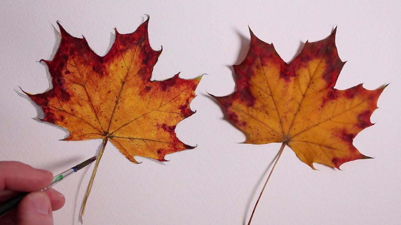 How to Draw a Autumn Leaf: Realism Challenge #1 - YouTube