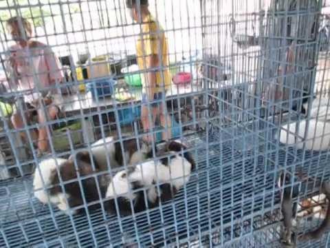 ร้านขายหมาน่ารัก..ในเมืองนครปฐมใกล้ๆ บิ๊กซีนครปฐม ; Little dog,sale.