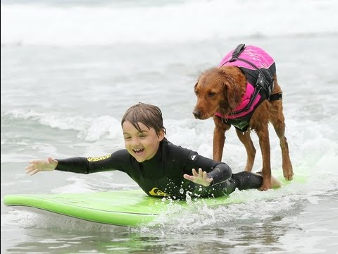 Dog surfing on ESPN's Sport's Center | Surf Dog Ricochet