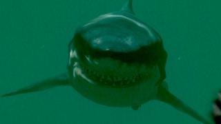 KILLER SHARKS!! Shark Attack Death Match 2 - Ep1 HD
