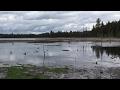 Swamp Flooded Live Stream #3 1,000+ Ducks 2017