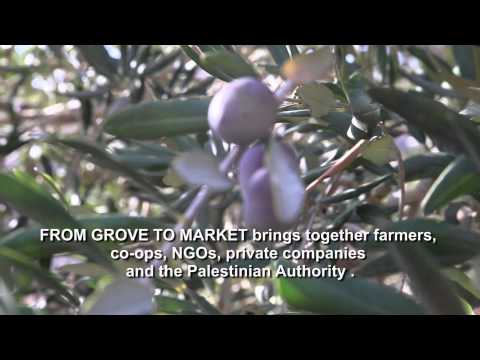 From Grove to Market - Oxfam in Palestine