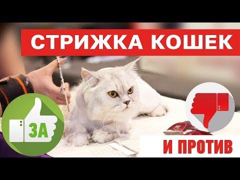 Стрижка кошек это вредно??? За и против. На что обратить внимание!