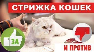 Стрижка кошек - это вредно??? За и против. На что обратить внимание!