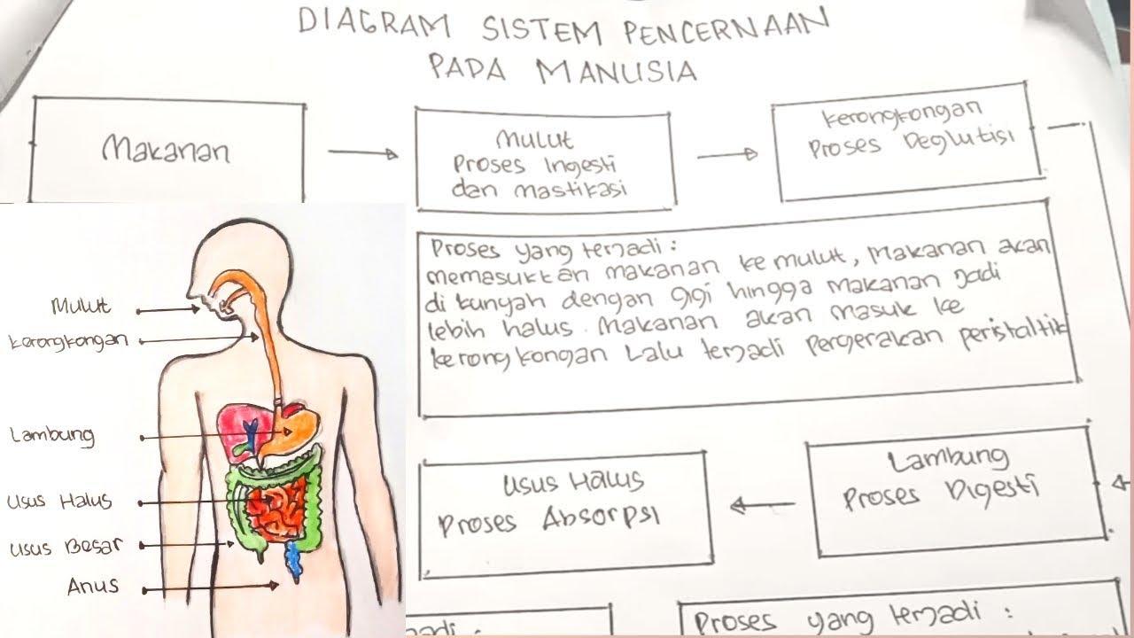 Diagram Sistem Pencernaan Pada Manusia Tugas Tema Kelas 5 Youtube