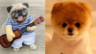 Amazing Dogs  Best Cute and Funny Dog Videos #1 | 2021 | Animal Tube
