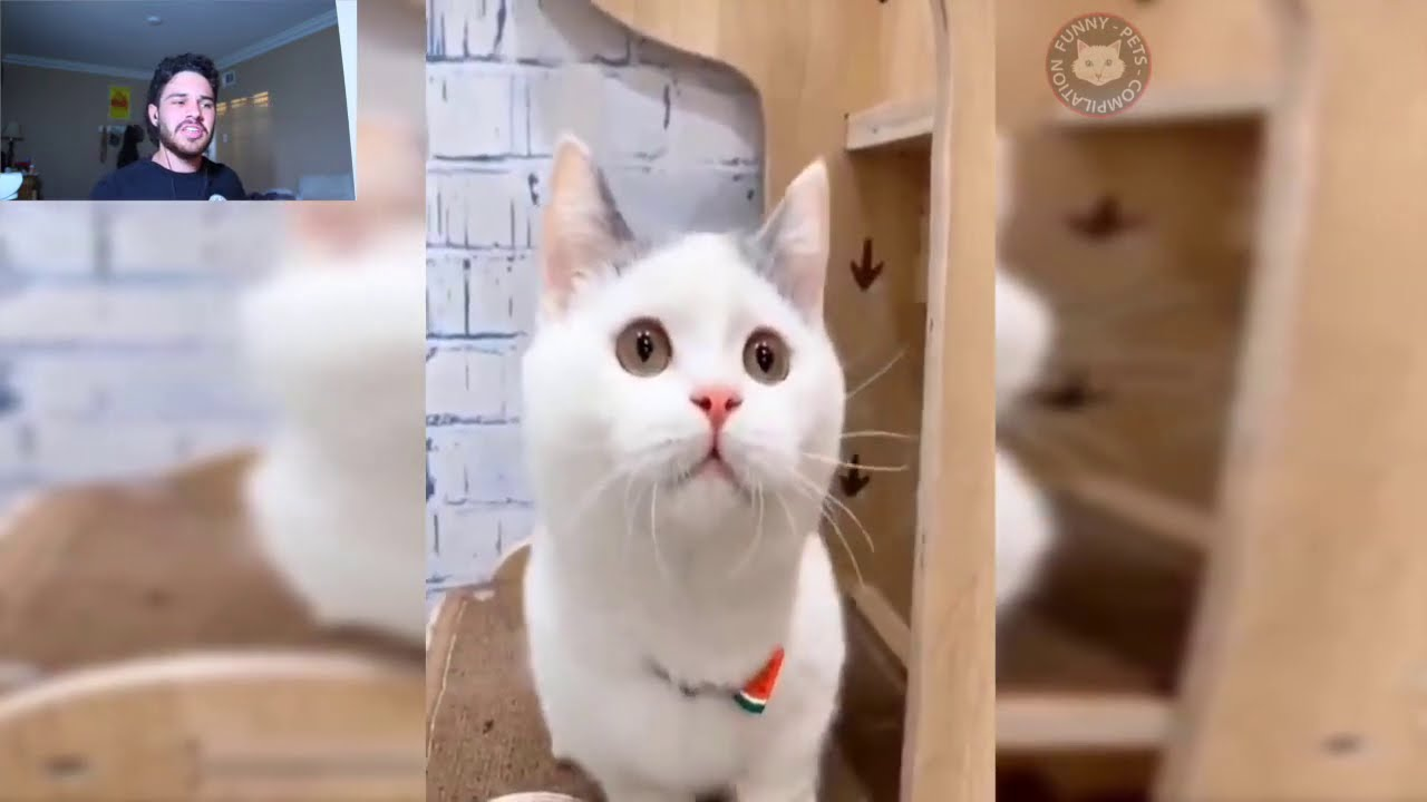 Cat Starts Talking To A Microphone