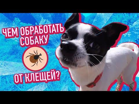 Вопрос: Действенный ли ошейник от блох для кошек Если да то почему Мнения?