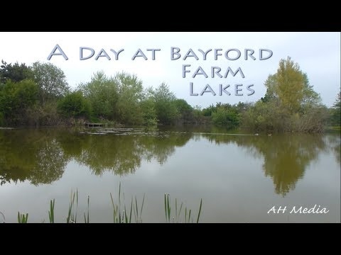 Catfish Fishing At Bayford Farm Lakes
