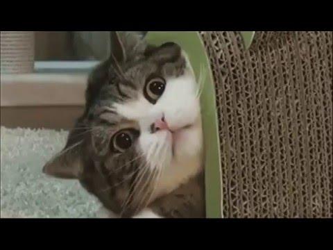 Кошки и собаки смешное видео