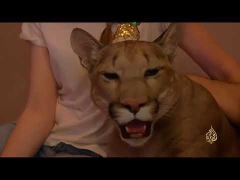 ليونيل ميسي.. أشهر الحيوانات في روسيا  - نشر قبل 24 دقيقة