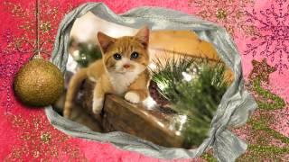 Поздравление с Новым годом от рыжего котенка 3. Видео открытка