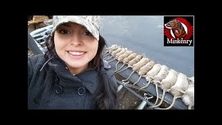 Mink and Dogs Killing Over 20 Rats!!!