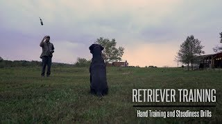 Hunting Dog Training - Formal Hand Training and Steadiness With Your Gundog
