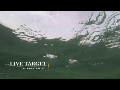 How Lures Swim: Live Target Blueback Herring