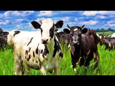 Lexington Large Animal Medicine & Surgery - Lexington, NC