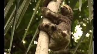 Puma vs Sloth